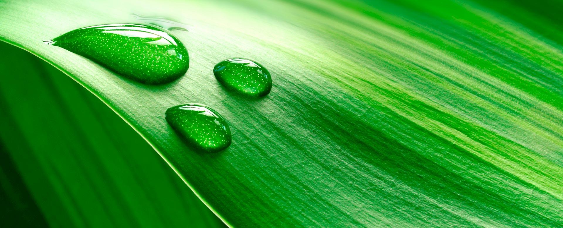 ambiental-gotas-sobre-folha